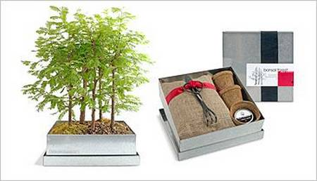 Bonsai Forest Makes You More Relaxed
