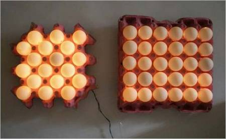 egg_shells_lights_3.JPG