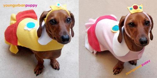 Super Mario Bros Series Dog Costume