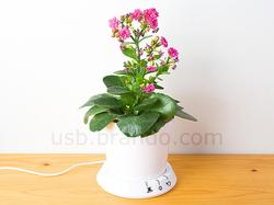 USB Flower Pot Help You Look After Your Plant
