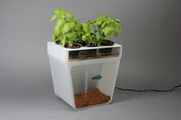 Aquaponics Garden Self-Cleaning Fish Tank