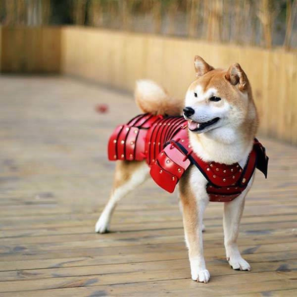 The Samurai Pet Armor Costume