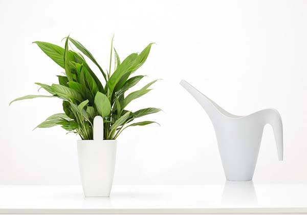 Xiaomi Bluetooth Smart Plant Monitor