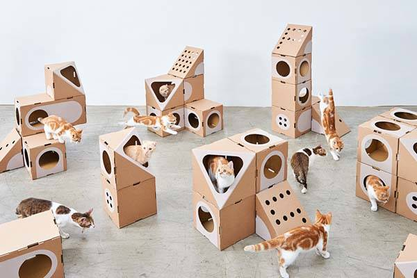 Cats Like Cardboard Boxes Bank Ad
