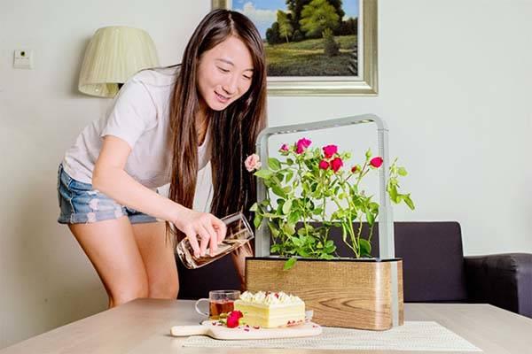 Nature Box App-Enabled Renewable Mini Indoor Garden