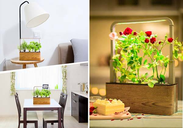 Nature Box App-Enabled Renewable Mini Indoor Garden