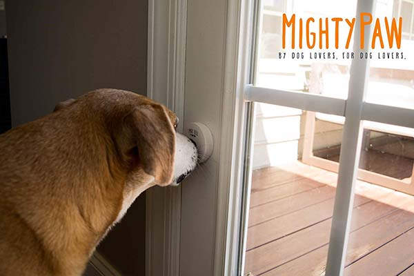 Mighty Paw Smart Bell 2.0 Dog Doorbell