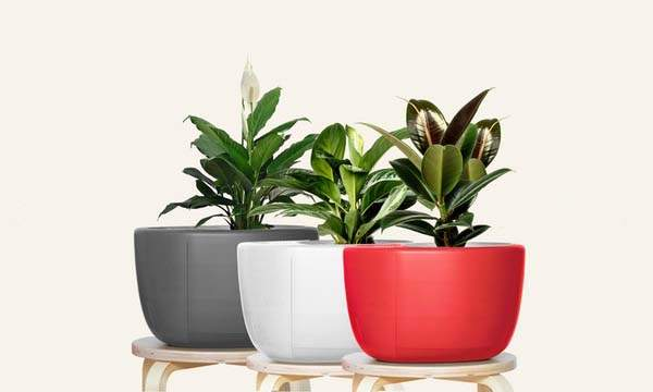 Urbie Air 3-In-1 Indoor Air Purifier with Self-Watering Plant Pot