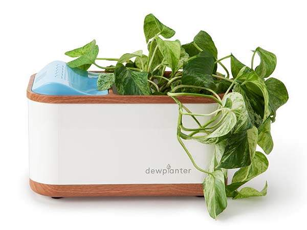 Dewplanter Water-Generating Self-Watering Planter