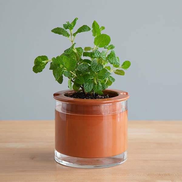 Handblown Glass Self-Watering Plant Pot