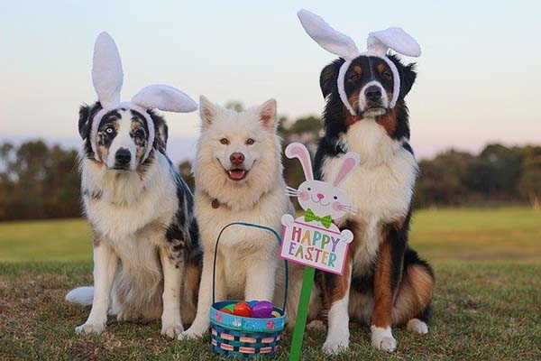 Happy Easter to Our Readers 2020