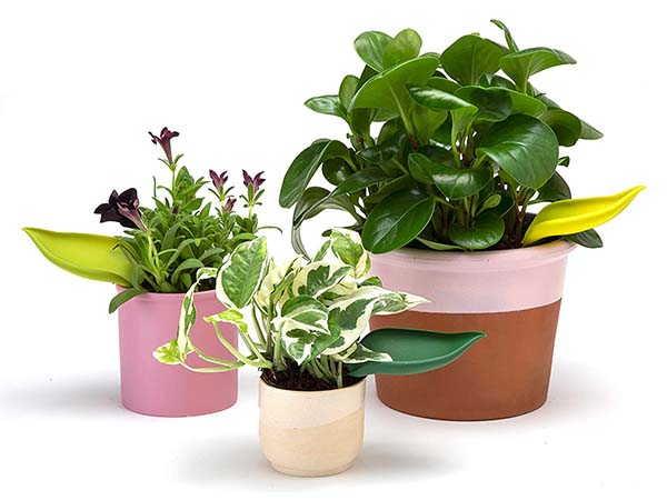 Leaflow Plant Pot Watering Funnel by Peleg Design