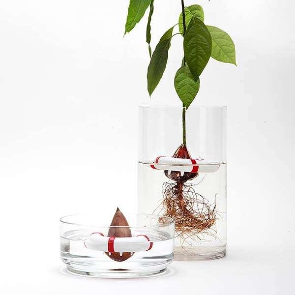 Life Buoy Shaped Avocado Seed Grower by Peleg Design
