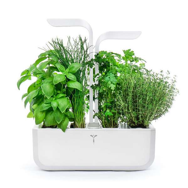 The Smart Mini Herb Garden Fits in Any Living Space