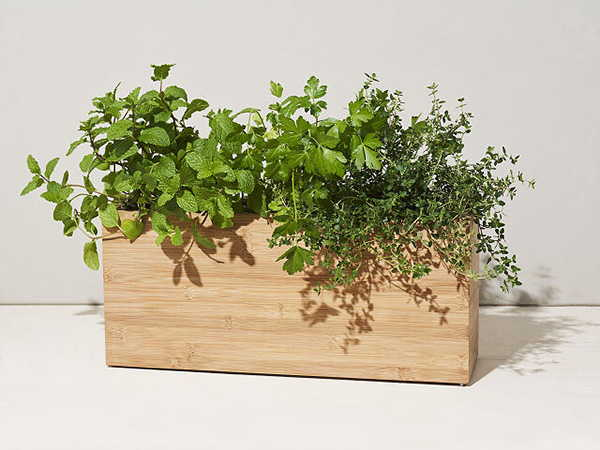 The App-Enabled Smart Plant Pot Made from Bamboo