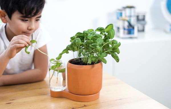 Greenfinity Indoor Self-Watering Planter