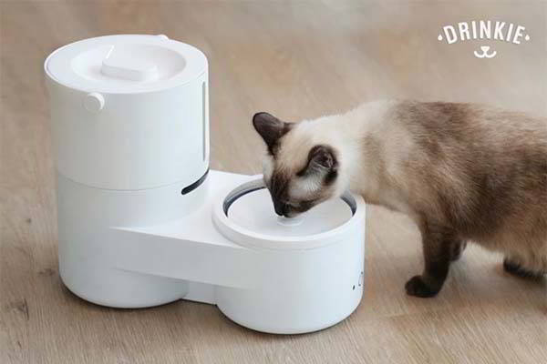 Drinkie Self-Cleaning Pet Water Dispenser with No Filter Needed